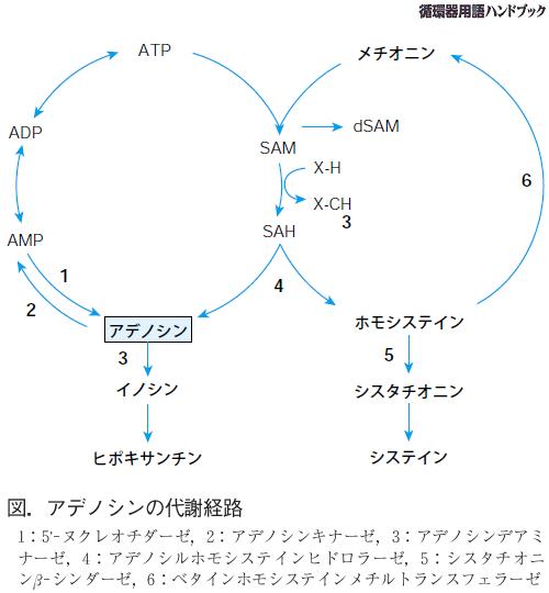 循環器用語ハンドブック(WEB版...